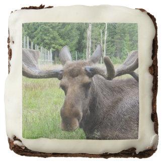 Moose WTF Chocolate Brownie