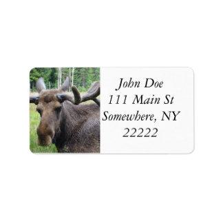 Moose WTF Label