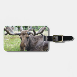 Moose WTF Luggage Tag