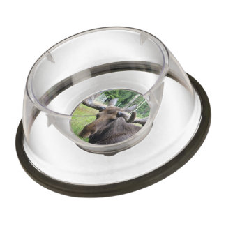 Moose WTF Pet Bowl