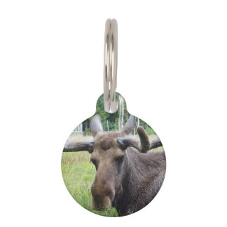Moose WTF Pet Tag