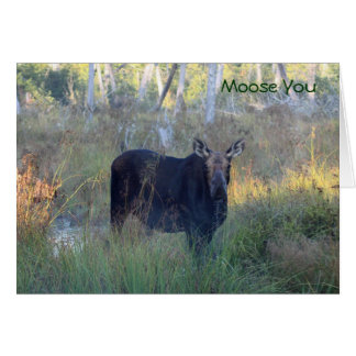Moose You: Card