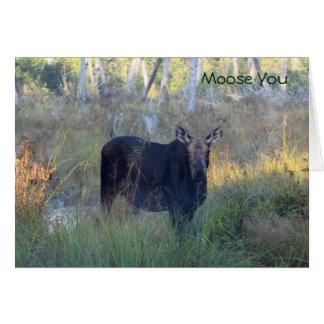 Moose You: Card