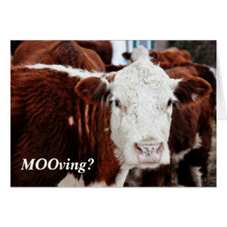 MOOving Time Card