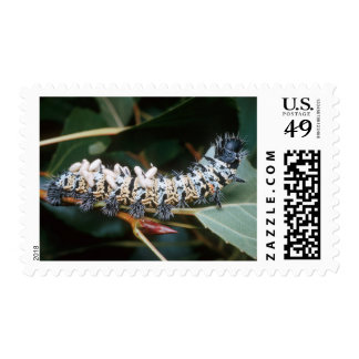 Mopane Worm (Imbrassia Belina) Carrying Cocoons Postage
