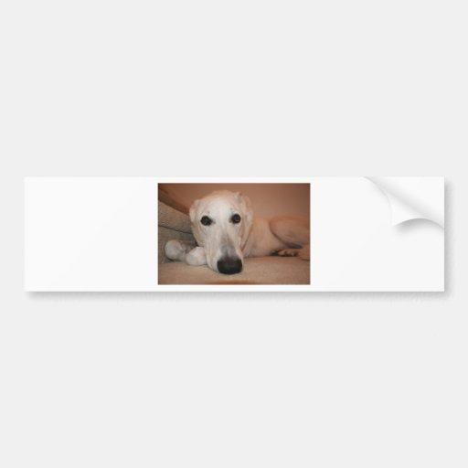 Mopey Pooch Bumper Sticker