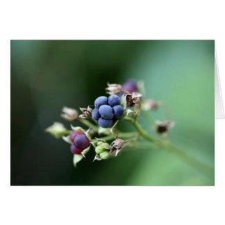 Mora ártica europea (caesius del Rubus) Tarjeta De Felicitación