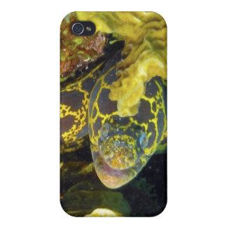 Moray de la cadena de oro iPhone 4 protector