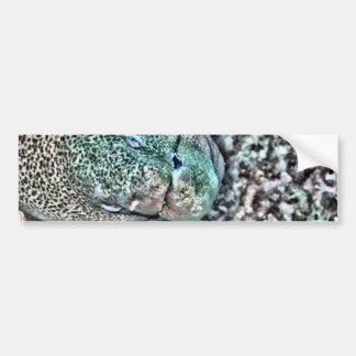 Moray Eel face Bumper Stickers