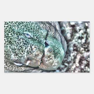 Moray Eel face Rectangular Sticker