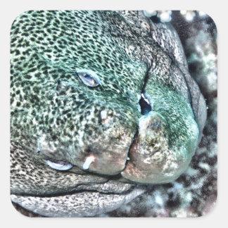 Moray Eel face Square Sticker