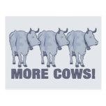 More Cows! Postcard