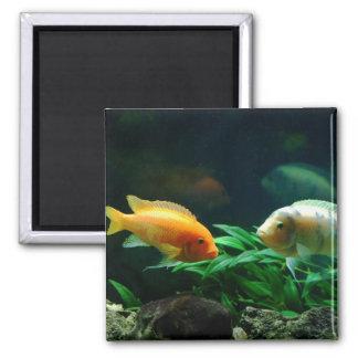 More Jack Dempsey Fish Magnet