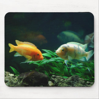 More Jack Dempsey Fish Mousepad