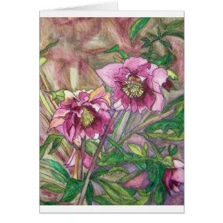 More pink hellebores greeting cards