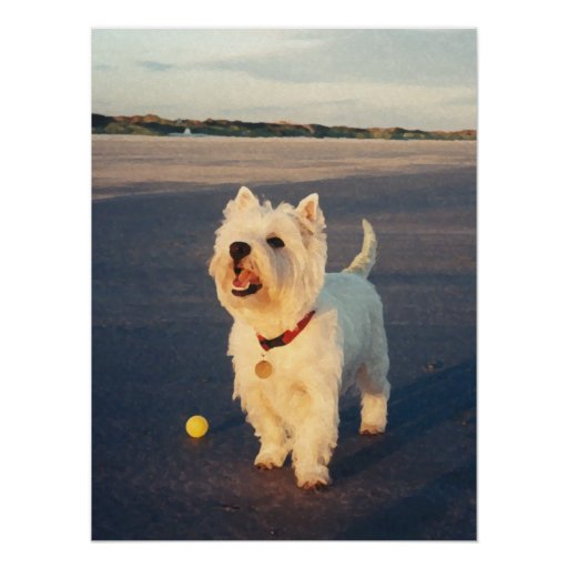 More Please!  Westie Ball Poster Poster
