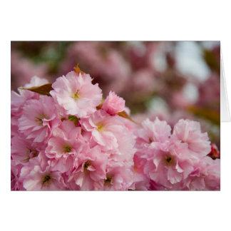 More Sakura Blossoms Greeting Card