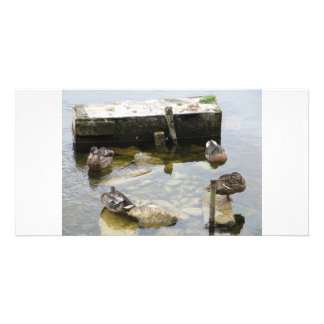 More Sleeping Ducks Photo Cards
