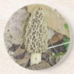 Morel Mushroom Coaster