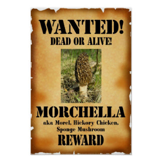 Morel - Wanted Dead or Alive Posters