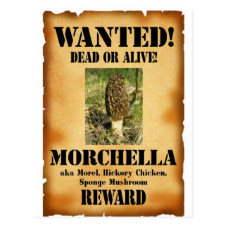 Morel - Wanted Poster Postcard