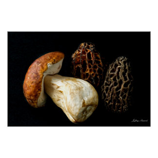 Morels and King Bolete Poster