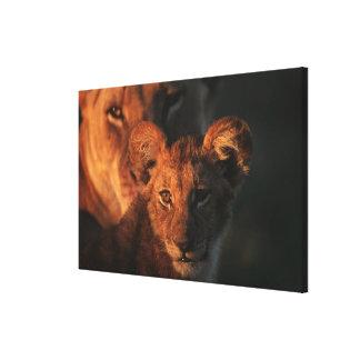 Moremi Wildlife Reserve, Botswana 2 Stretched Canvas Prints
