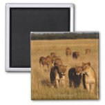Moremi Wildlife Reserve, Botswana 2 Inch Square Magnet