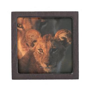 Moremi Wildlife Reserve, Botswana 2 Jewelry Box