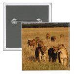 Moremi Wildlife Reserve, Botswana Button