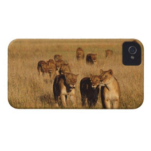 Moremi Wildlife Reserve, Botswana Case-Mate iPhone 4 Cases