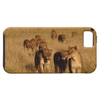 Moremi Wildlife Reserve, Botswana iPhone SE/5/5s Case