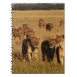 Moremi Wildlife Reserve, Botswana Spiral Notebook