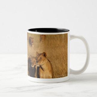 Moremi Wildlife Reserve, Botswana Two-Tone Coffee Mug