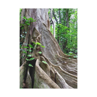 Moreton Bay Fig Tree Roots Canvas Print