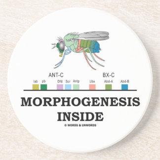 Morfogénesis dentro de genes de la mosca del vinag posavaso para bebida
