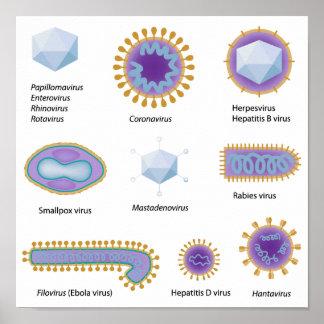 Morfología del poster común de los virus