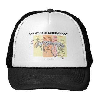Morfología del trabajador de la hormiga gorras de camionero