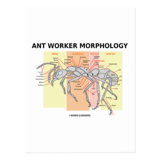 Morfología del trabajador de la hormiga postal