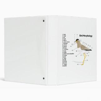 "Morfología externa de un Vanellus Malabaricus del  Carpeta 1"""