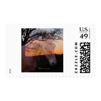 Morgan Colt in Sunset Postage Stamps