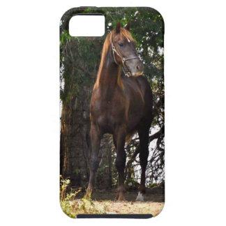 Morgan Flaxen Mane iPhone SE/5/5s Case