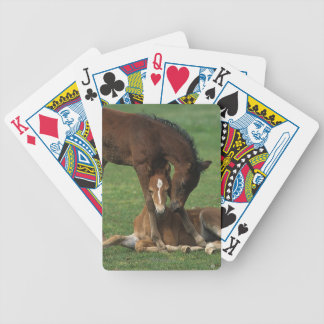 Morgan Foals Playing Bicycle Playing Cards