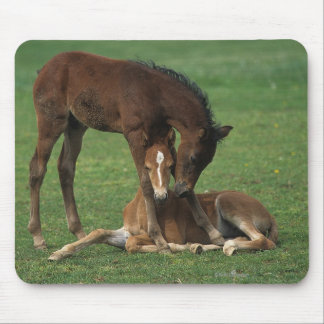 Morgan Foals Playing Mouse Pad