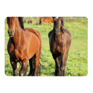 Morgan Horse 5x7 Paper Invitation Card