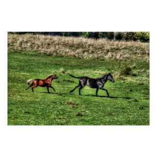 Morgan Horse and Pony Cantering in a Field Poster
