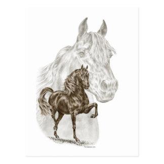 Morgan Horse Art Postcard