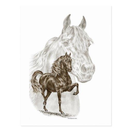 Morgan Horse Art Post Cards