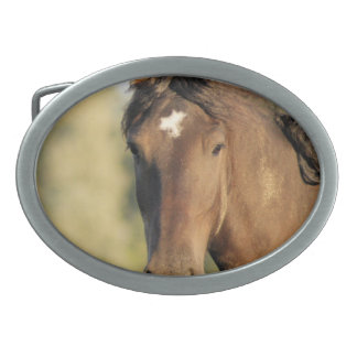Morgan Horse Belt Buckle