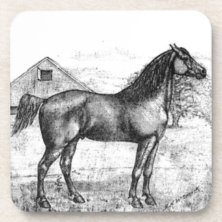Morgan Horse Breed 1888 Vintage Drawing Art Coaster